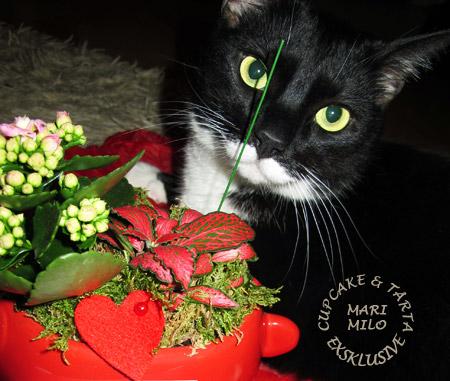 Ludvigs katt Minus och jul