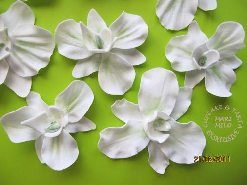 Sockerblommor - orkidéer