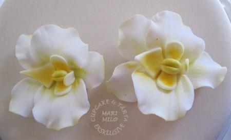 Orkideér i blompasta